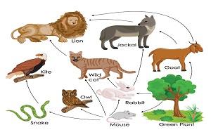 Екосистеми-1